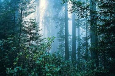 云南钟灵山国家森林公园